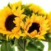 Букет от слънчогледи и рафия