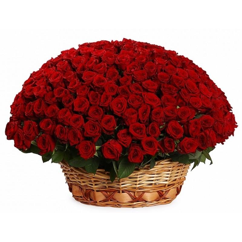 Кошница от 251 червени рози